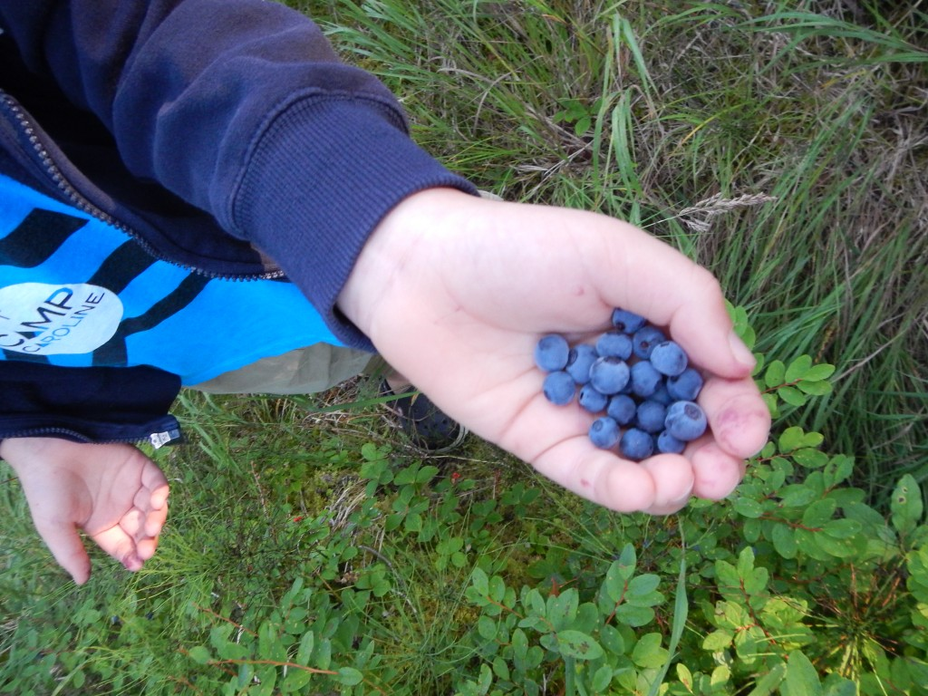August is blueberry season! We were in blueberry heaven!