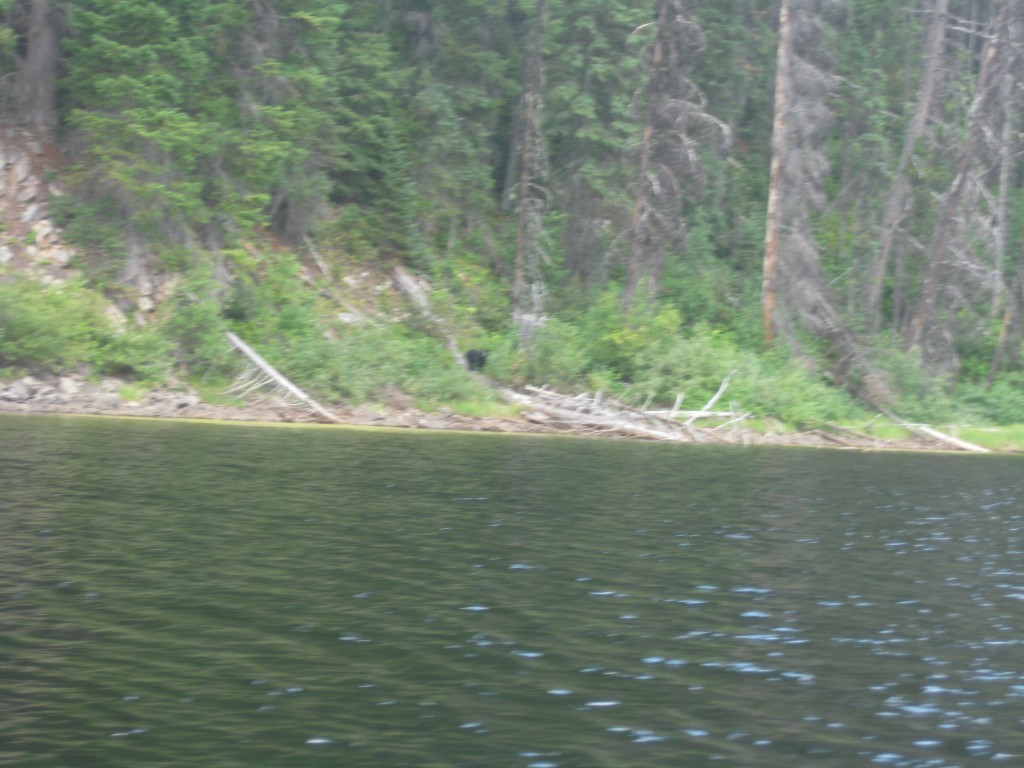 See that black thing in the middle. That's a bear CUB. Extra motivation to get the heck out of the lagoon.