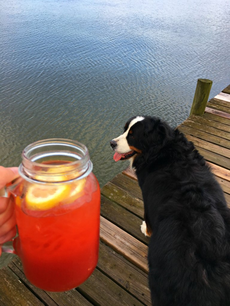 Alabama Slammer and a Bernese Mountain Dog