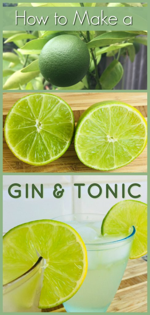 Gin and Tonic Recipe by The Spirited Thrifter